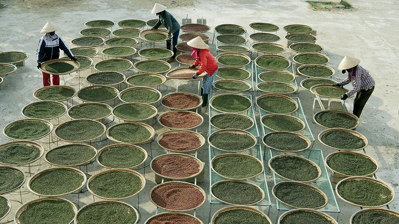 Vườn tiêu hữu cơ Gia Lai