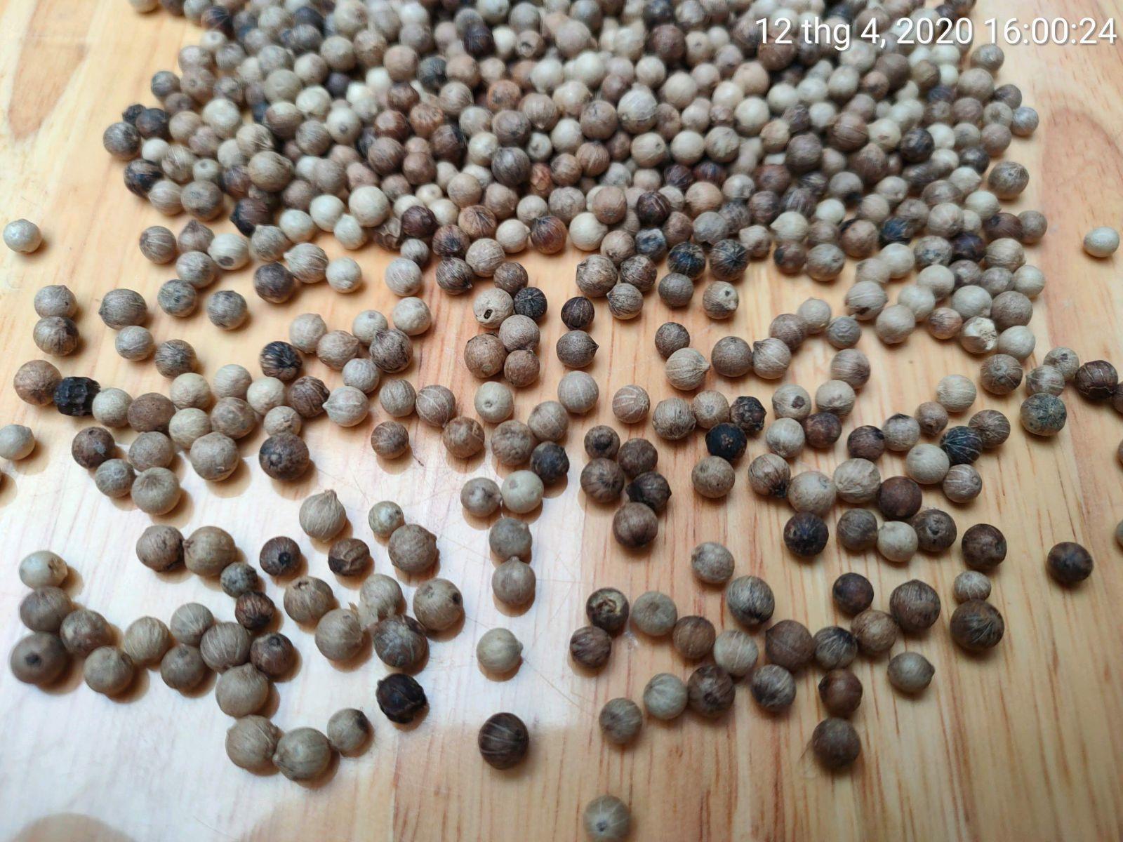 Tiêu sọ hạt Mỹ Lộc